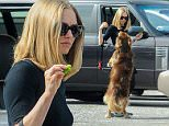 *EXCLUSIVE* Los Angeles, CA - A curvy Amanda Seyfried feeds her dog Finn some tasty veggies while on a break between filming scenes for her new film 'The Last Word' in Los Angeles. \n AKM-GSI   March  2, 2016\nTo License These Photos, Please Contact :\nSteve Ginsburg\n(310) 505-8447\n(323) 423-9397\nsteve@akmgsi.com\nsales@akmgsi.com\nor\nMaria Buda\n(917) 242-1505\nmbuda@akmgsi.com\nginsburgspalyinc@gmail.com