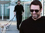 Picture Shows: Hugh Jackman  March 12, 2016\n \n Actor Hugh Jackman spotted walking his dogs in New York City, New York. Hugh is enjoying some downtime after promoting 'Eddie The Eagle' in South Korea.\n \n Non Exclusive\n UK RIGHTS ONLY\n \n Pictures by : FameFlynet UK � 2016\n Tel : +44 (0)20 3551 5049\n Email : info@fameflynet.uk.com