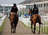 Horses make their way back to the stables after a morning gallops session during Champion Day of the 2016 Cheltenham Festival at Cheltenham Racecourse. PRESS ASSOCIATION Photo. Picture date: Tuesday March 15, 2016. See PA story RACING Cheltenham. Photo credit should read: Andrew Matthews/PA Wire. RESTRICTIONS: Editorial Use only, commercial use is subject to prior permission from The Jockey Club/Cheltenham Racecourse. Call +44 (0)1158 447447 for further information.