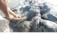 Strange sea creature washes up on beach