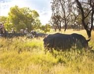 Safari d'Exception au Parc Kruger