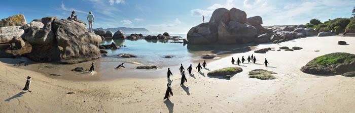 Plage de Boulders Beach au Cap