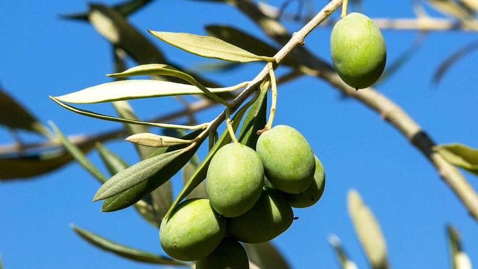 Oliiviöljy on yksi osa välimerellistä ruokavaliota.