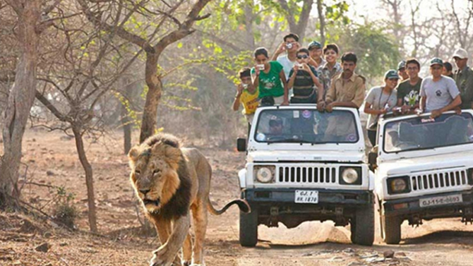 Gir-National-Park