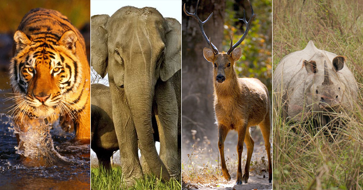 India Wildlife Tourism