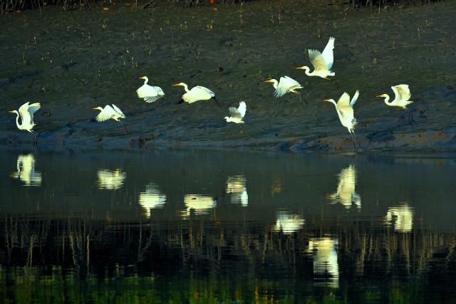 Sunderbans Birds