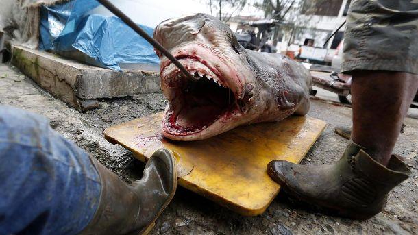 Banda Aceh, Sumatra, Indonesien: Fischer bringen einen gefangenen Hai zum Fischmarkt. (Quelle: dpa/Hotli Simanjuntak)