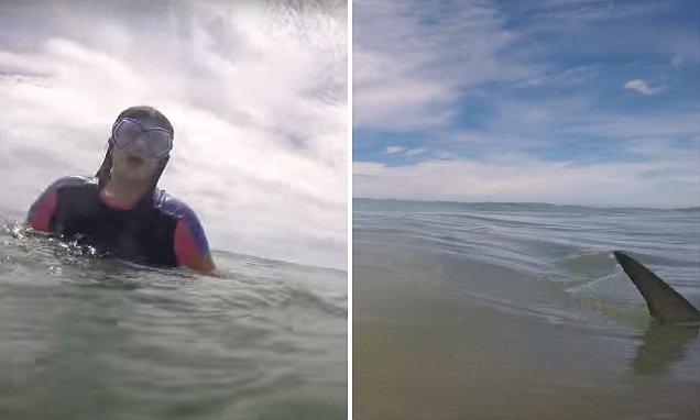 A SHARK swims past a man's daughter as he films her swimming on Papamoa Beach