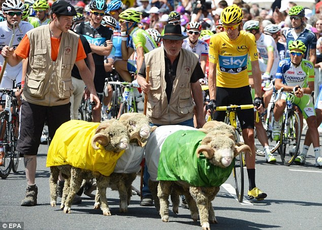 Funny farm: Wiggins is joined by several sheep as the Tour de France comes to an end