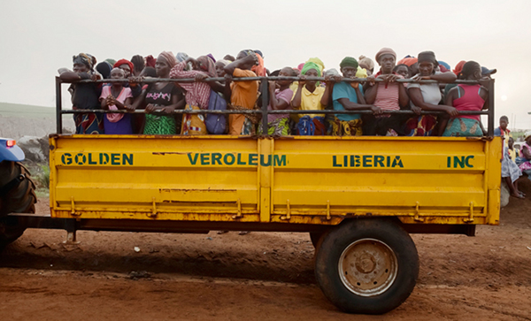 Golden Veroleum workers cram onto a tractor-drawn flatbed on their way to plant and water the fields.