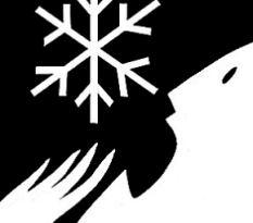 snow detail.jpg