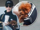 Exclusive... 52046885 Singer Katy Perry was spotted leaving with her two dogs after being with two other friends in West Hollywood, California on May 6, 2016.  Katy carried her small puppy while another followed behind her. FameFlynet, Inc - Beverly Hills, CA, USA - +1 (310) 505-9876