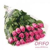Букет из 25 розовых розы №149