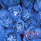 Букет из 55 синих роз №167