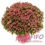 Букет кустовых розовых роз №174