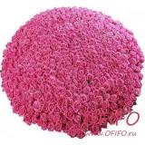 Букет из 1001 розовой розы №165