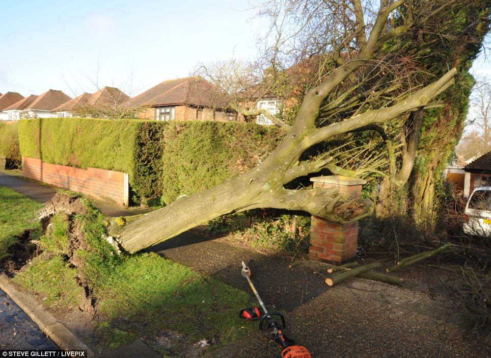 The raging storm felled a tree in Epsom, Surrey, as forecasters predicted there would be some respite by tomorrow, as winds drop and the rain eases off