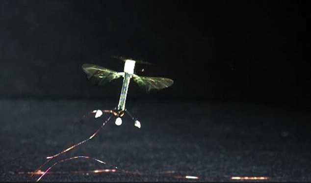 The robot takes off and flies normally. When the electrode patch is supplied with a charge, it can stick to almost any surface, from glass to wood to a leaf. To detach, the power supply is simply switched off.The patch requires about 1,000 times less power to perch than it does to hover