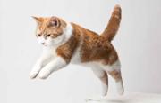 Cómo minimizar el estrés de la visita al veterinario