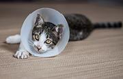 Cómo detectar la gripe en gatos: Fiebre, estornudos y otros síntomas