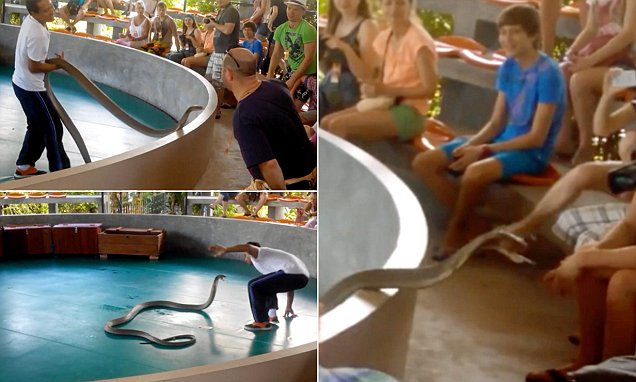 Video shows cobra snake escapes handler and tries to bite crowd members during show