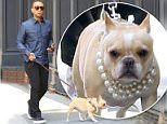 19.May.2016 - New York ñ USA\n*EXCLUSIVE ALL ROUND PICTURES*\n*** STRICTLY AVAILABLE FOR UK AND GERMANY USE ONLY ***\nNew York, NY - John Legend takes French Bulldog named Pippa who shows off  a gorgeous pearl necklace for a walk this morning after a TV appearances.\nBYLINE MUST READ : AKM-GSI-XPOSURE\n***UK CLIENTS - PICTURES CONTAINING CHILDREN PLEASE PIXELATE FACE PRIOR TO PUBLICATION ***\n*UK CLIENTS MUST CALL PRIOR TO TV OR ONLINE USAGE PLEASE TELEPHONE 0208 344 2007*