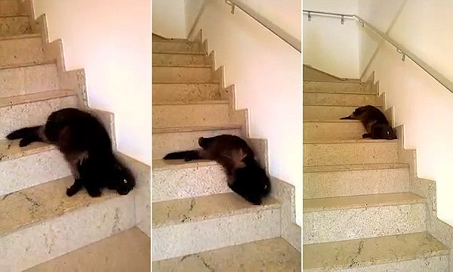 Cat video of feline who thinks it's a snake slithering down stairs on YouTube