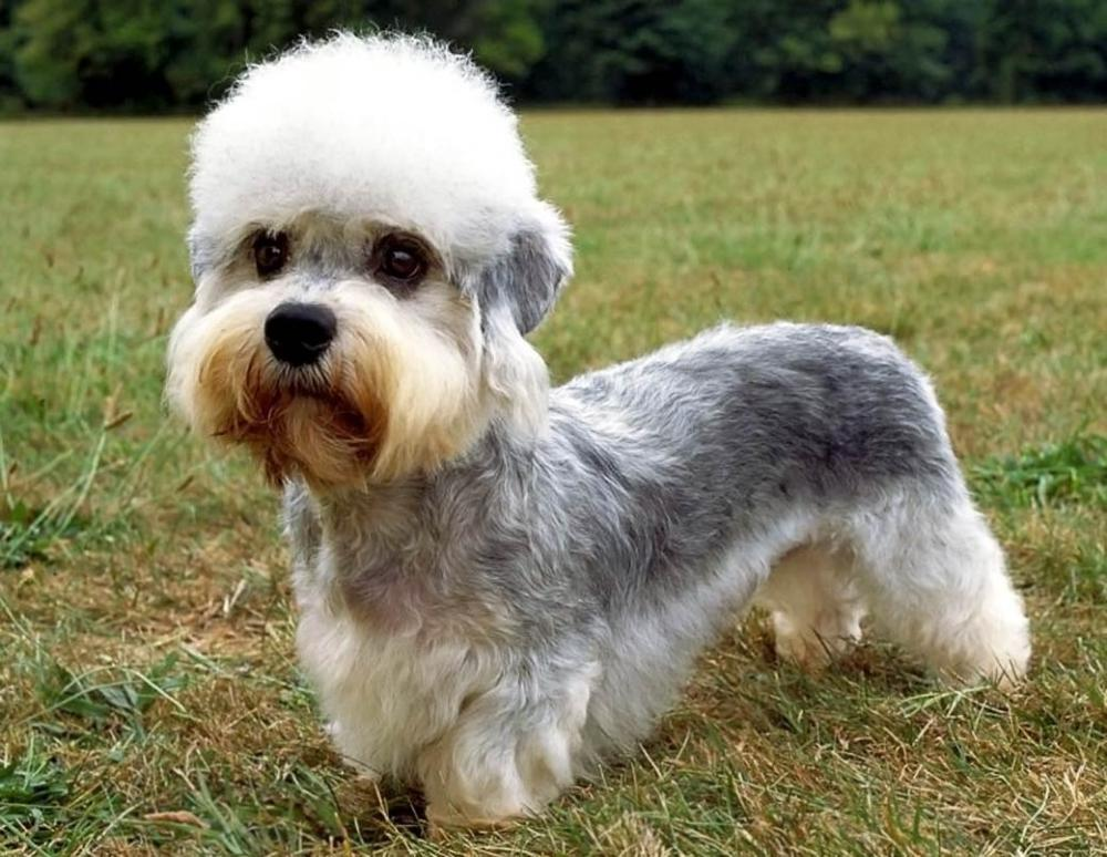 10 необычных пород собак. Фото 2