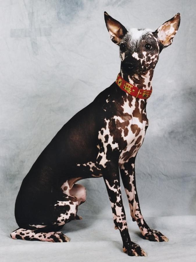 10 необычных пород собак. Фото 5