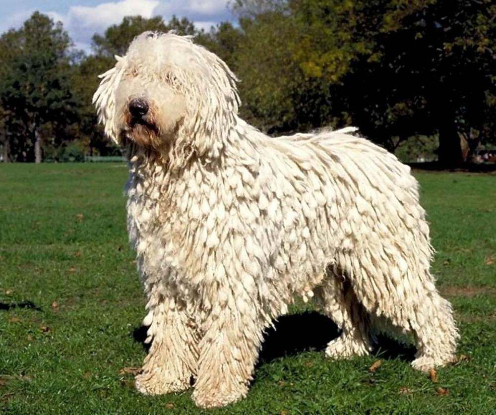 10 необычных пород собак. Фото 7