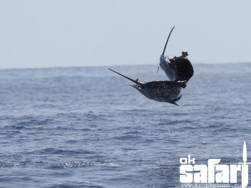 Рыбалка на парусника в Коста-Рике. Фото О.Елагина www.trophyhunt.ru