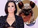 Demi Lovato and snap chat CAT