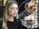Amber Heard leaves court in LA after claiming Johnny Depp physically assaulted her\n\nRef: SPL1292249  270516  \nPicture by: Clint Brewer / Splash News\n\nSplash News and Pictures\nLos Angeles: 310-821-2666\nNew York: 212-619-2666\nLondon: 870-934-2666\nphotodesk@splashnews.com\n