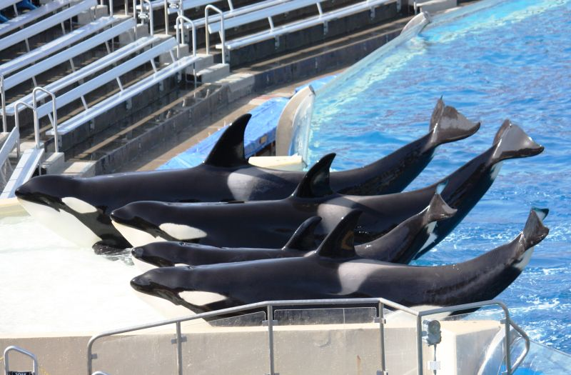 Orkid, Kasatka, Kalia and Nakai (back to front)