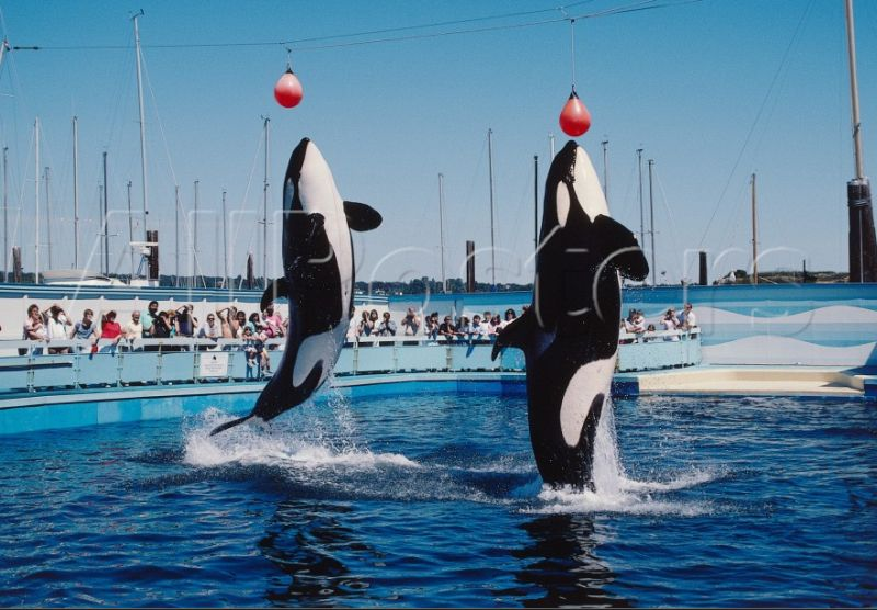 Haida 2 (left) and Tilikum at Sealand
