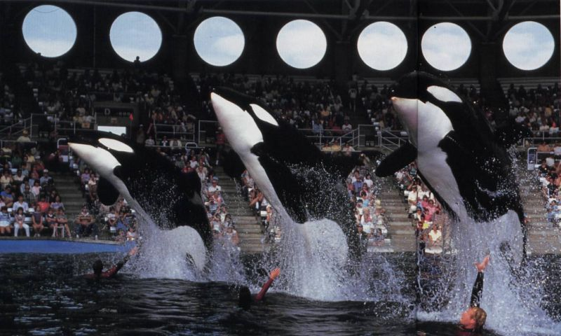 Kona 2, Kahana and Kasatka (left to right)