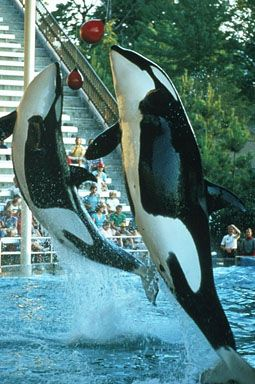 Katina and Kasatka (right)