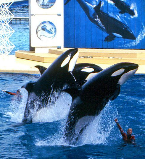 Kahana, Katina and Kasatka (left to right)