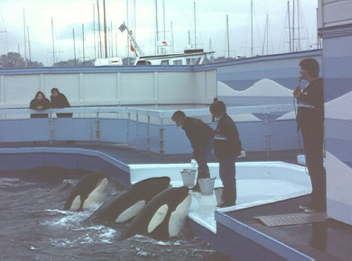 Nootka 4, Haida 2 and Tilikum (l.r.)