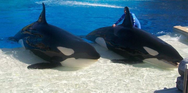 Kasatka (left) and Nakai