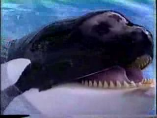 screencap from movie Jaws 3