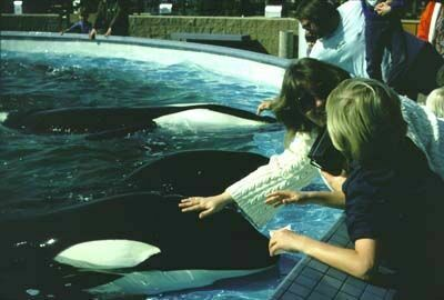 Kotar (front), Kasatka and Canuck 2