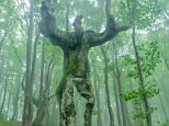 Tree that looks like a man This bizarrely shaped tree looks just like a man. The 65ft-tall beech tree appears to feature proportional legs, arms, a chest and even a head. The tree, which is found in the heart of the Balkan Mountains, in Bulgaria, often leaves walkers travelling through the forest speechless. Amateur photographer Deyan Kossev spotted the unusual tree when he was hiking through the forest. © Deyan Kossev/Solent News & Photo Agency UK +44 (0) 2380 458800