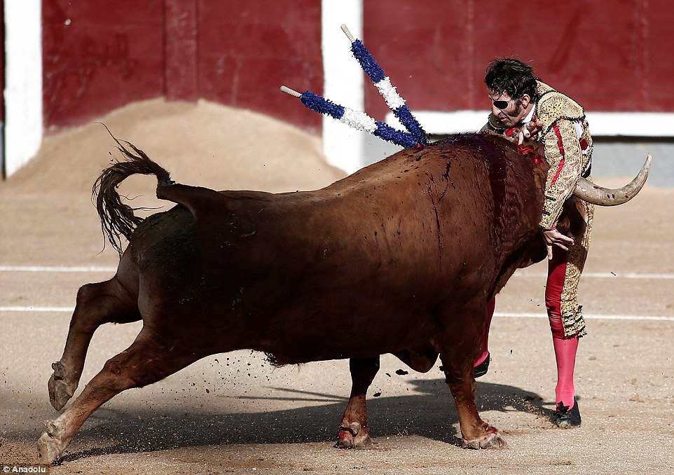 Padilla somersaulted in the air before the bull tried to gore the back of his legs with its horns as the shocked audience watched on