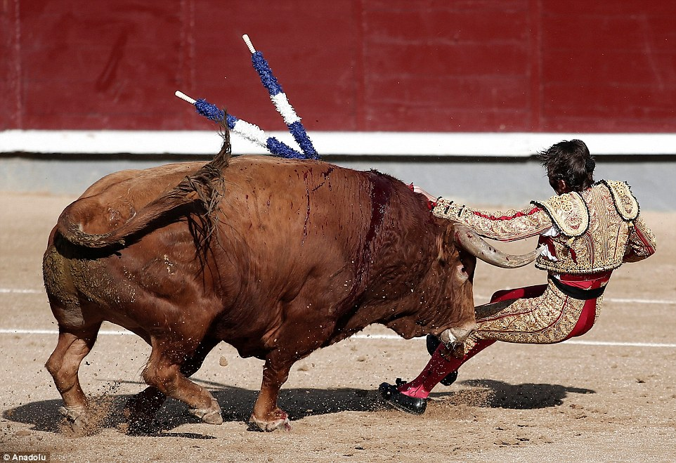 Great escape: Incredibly, the matador walked away from the terrifying ordeal with only minor injuries - though blood was seen on his face
