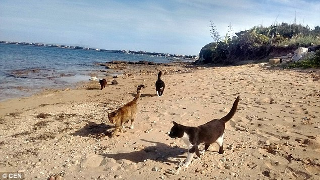 The cat colony at Su Pallosu in Sardinia has existed for over a century and now there's around 60 cats