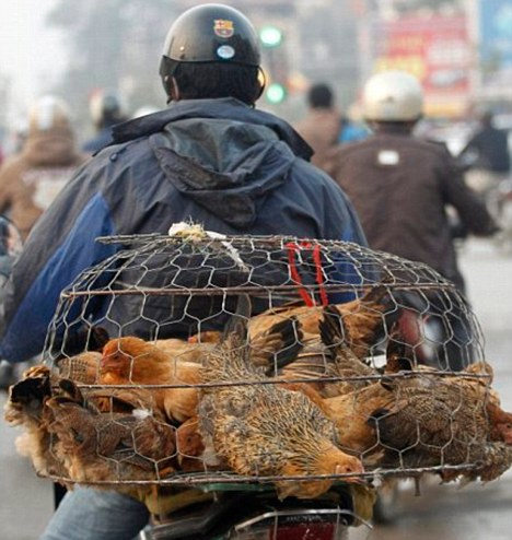 A deadly strain of bird flu previously unknown in people has begun to mutate into a form more likely to cause a human pandemic, say scientists