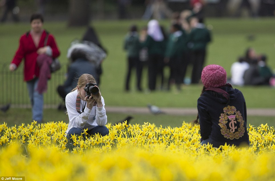Snap: A photographer takes a picture of her friend as they crouch among the spring flowers in St James' Park, London