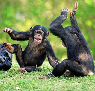 Chimpanzee seemingly telling a joke