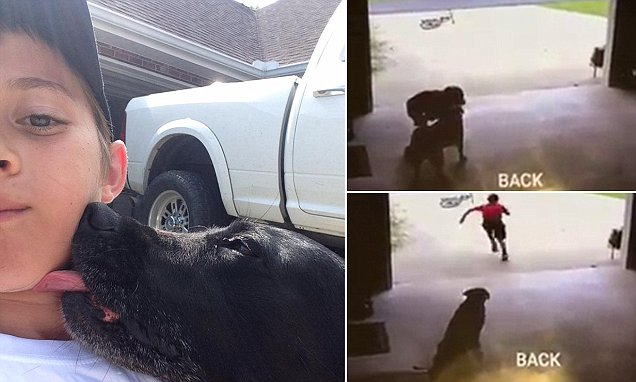 Louisiana woman shares CCTV video of little boy sneaking into garage to cuddle her dog